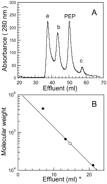 Determination of the molecular weight of the enzyme by gel