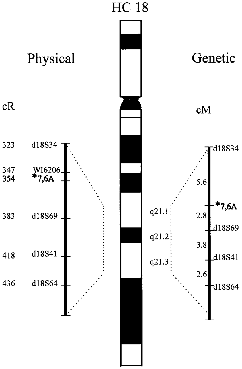 Cartoon map of chromosome 18 with CTG18.1 localization