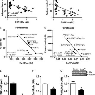 (PDF) Estrogen receptor alpha protects pancreatic beta