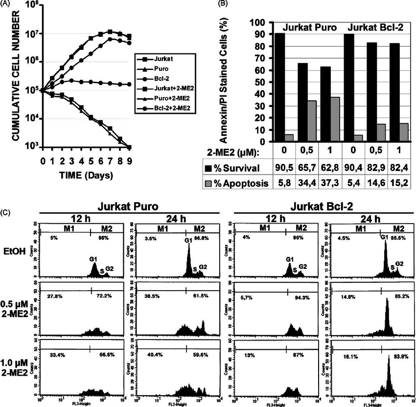 Bcl-2-mediated apoptotic block is linked to G1/S cell