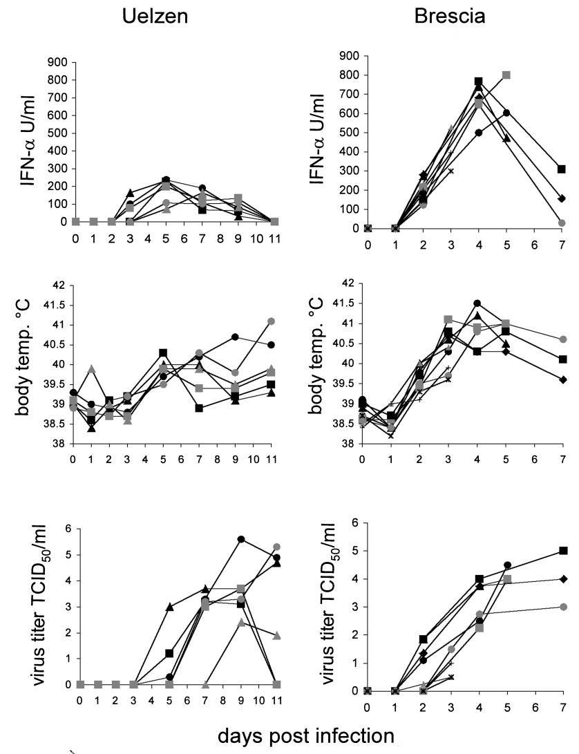 hight resolution of serum ifn levels body temperature and serum viral titers of pigs infected with