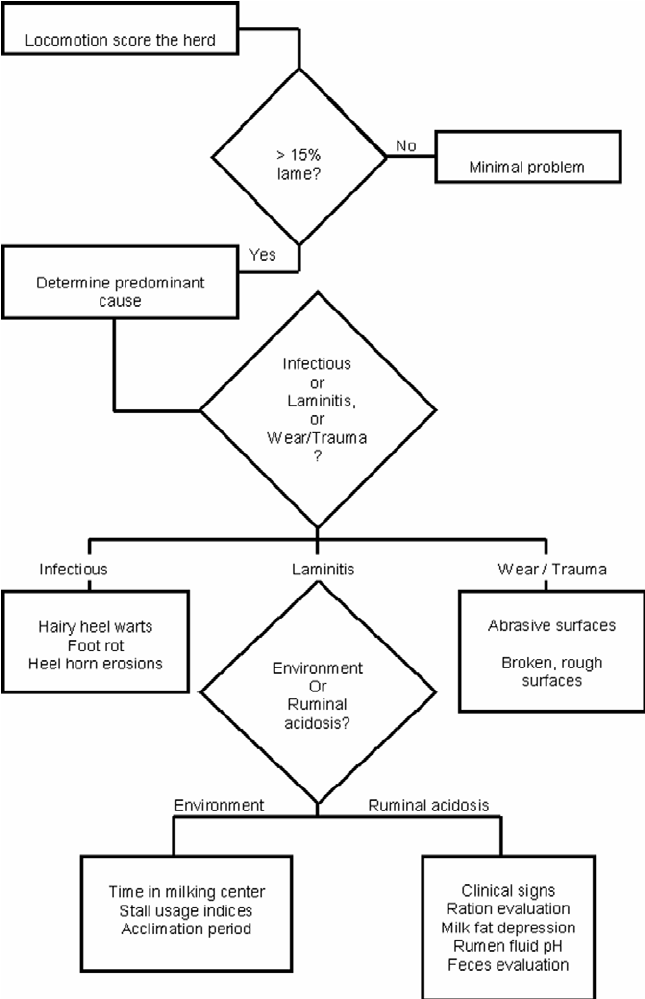 Flowchart for Investigation of a Lameness Problem Herd