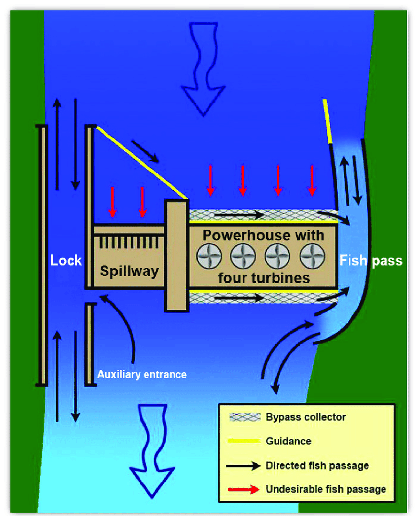 hight resolution of schematic plan view of a hydropower dam showing upstream and downstream fish passage facilities