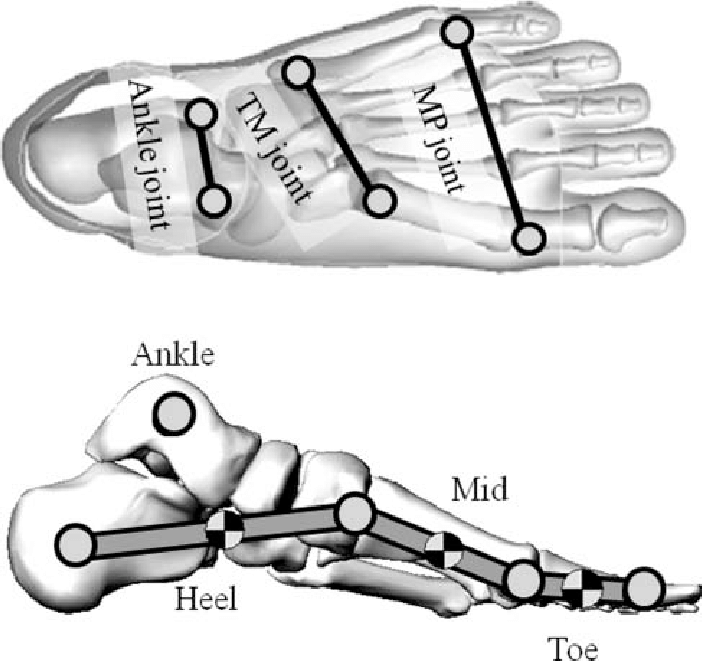 joints of the foot diagram 2016 dodge ram wiring model applied in this study tm and mp represented tarsometatarsal metatarsophalangeal