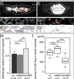 Fox Nervou System Diagram Genomic Responses To Selection For Tame