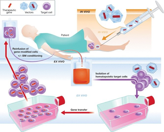 in vivo gene therapy diagram vectra c towbar wiring and ex concepts for the application download scientific