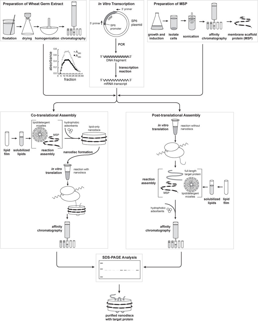 hight resolution of protocol flowchart including preparation of wheat germ extract sections 2 1 and 3 1