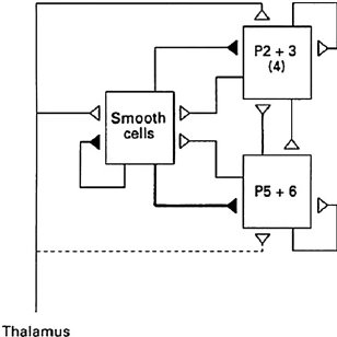 (PDF) Mapping the Matrix: The Ways of Neocortex