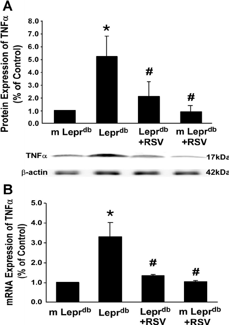 RSV decreased protein and mRNA expression of TNF- ␣ in