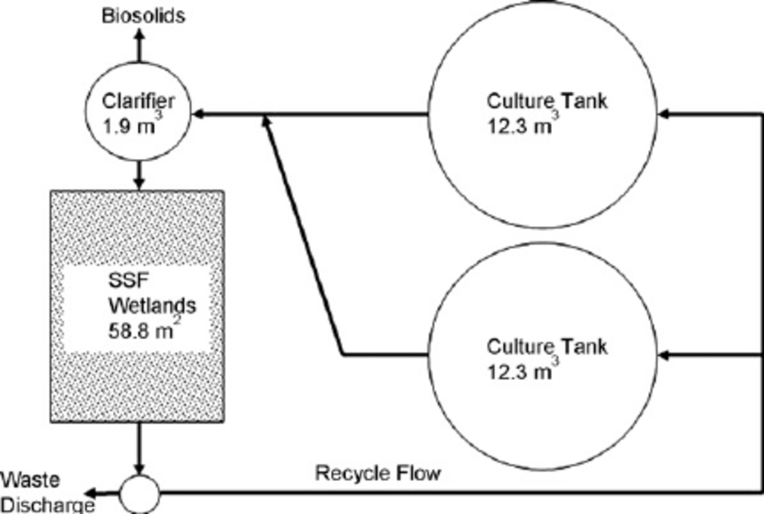Layout of the tilapia production system using a clarifier