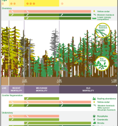 conceptual diagram depicting observed patterns of forest development following onset of yellow cedar decline year ranges presented are estimates  [ 848 x 943 Pixel ]