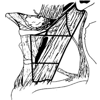 Anatomical Structures Defining the Boundaries of the Neck