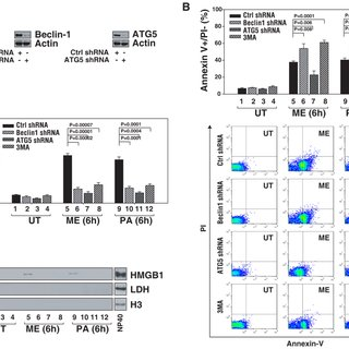 (PDF) HMGB1 Release and Redox Regulates Autophagy and