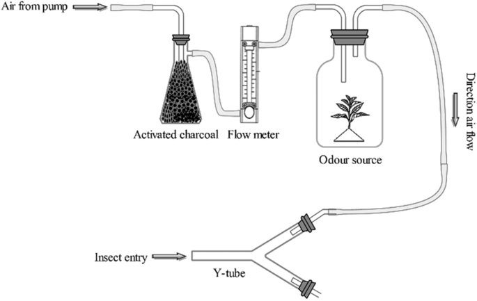 A schematic diagram of the Y-tube olfactometer, modified
