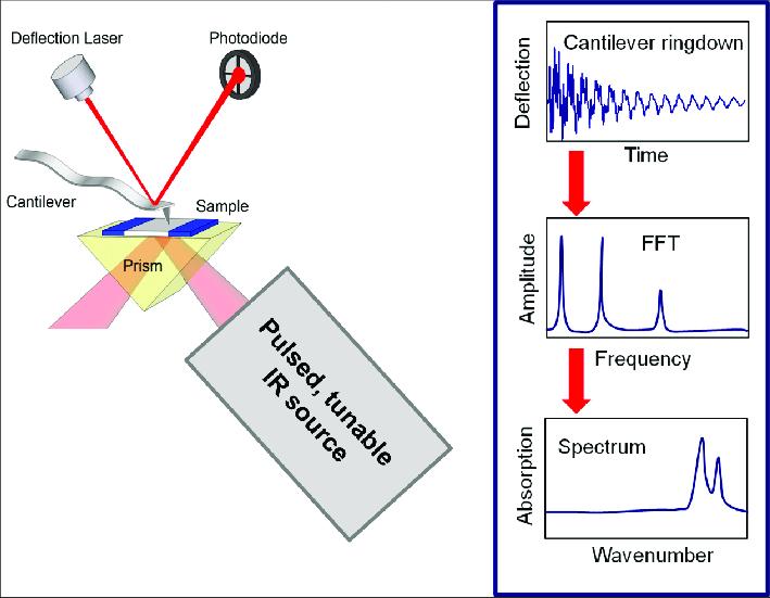 Principle of operation of the AFM-IR technique. | Download Scientific Diagram