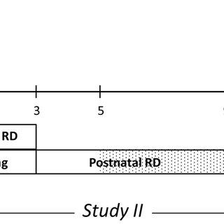 (PDF) Prenatal Metformin Exposure in a Maternal High Fat