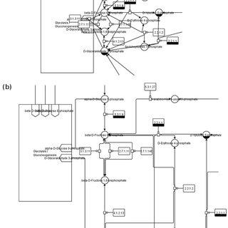 Valine, leucine and isoleucine degradation (KEGG). Valine