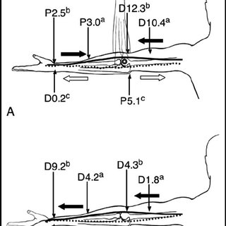 (PDF) Structure and Biomechanics of Peripheral Nerves: Nerve Responses to Physical Stresses and