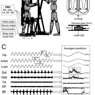 (PDF) Alternate leg movement amplifies locomotor-like