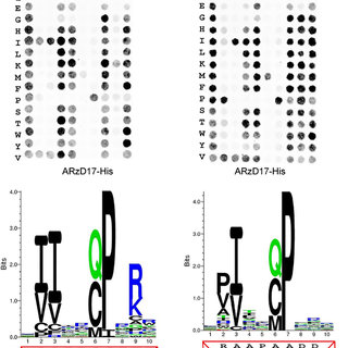 (PDF) Peptide array based screening reveals a large number