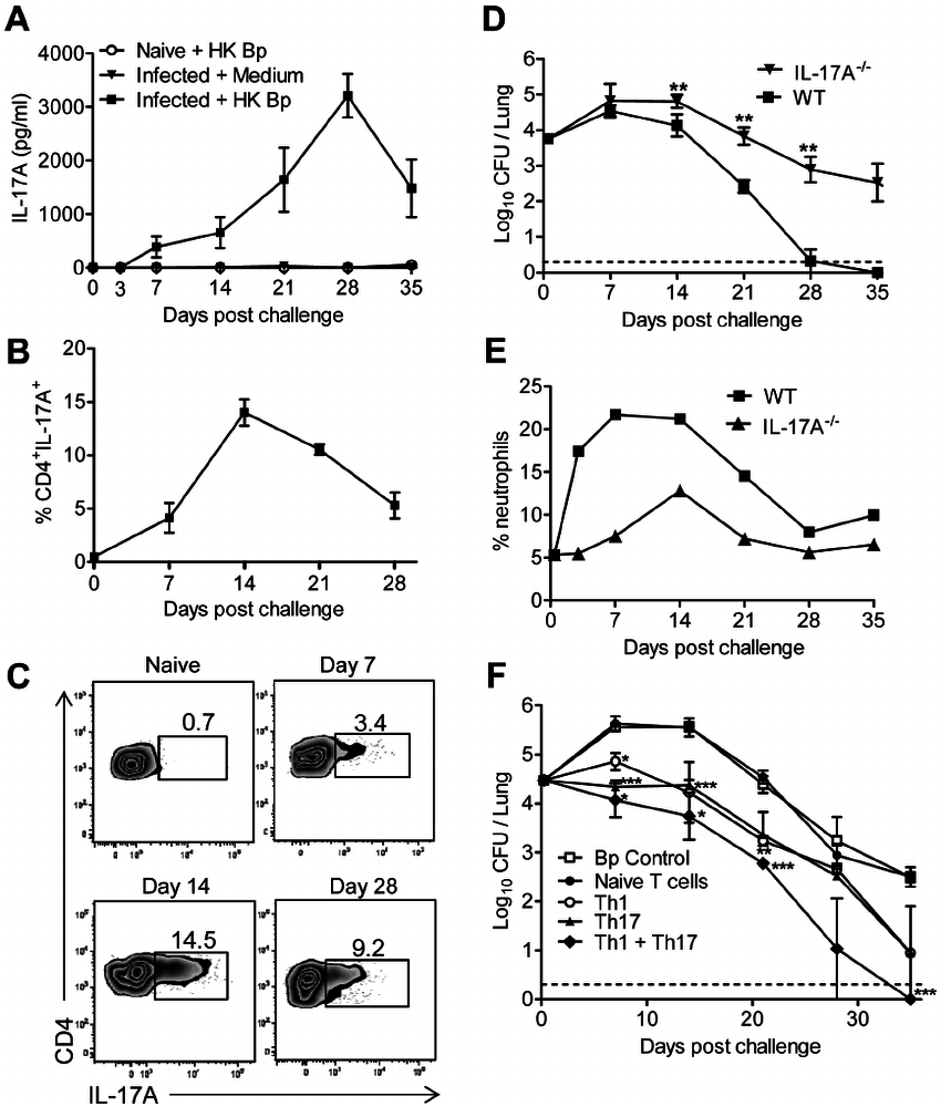 hight resolution of th17 and th1 cells mediate host immunity to b pertussis in the download scientific diagram
