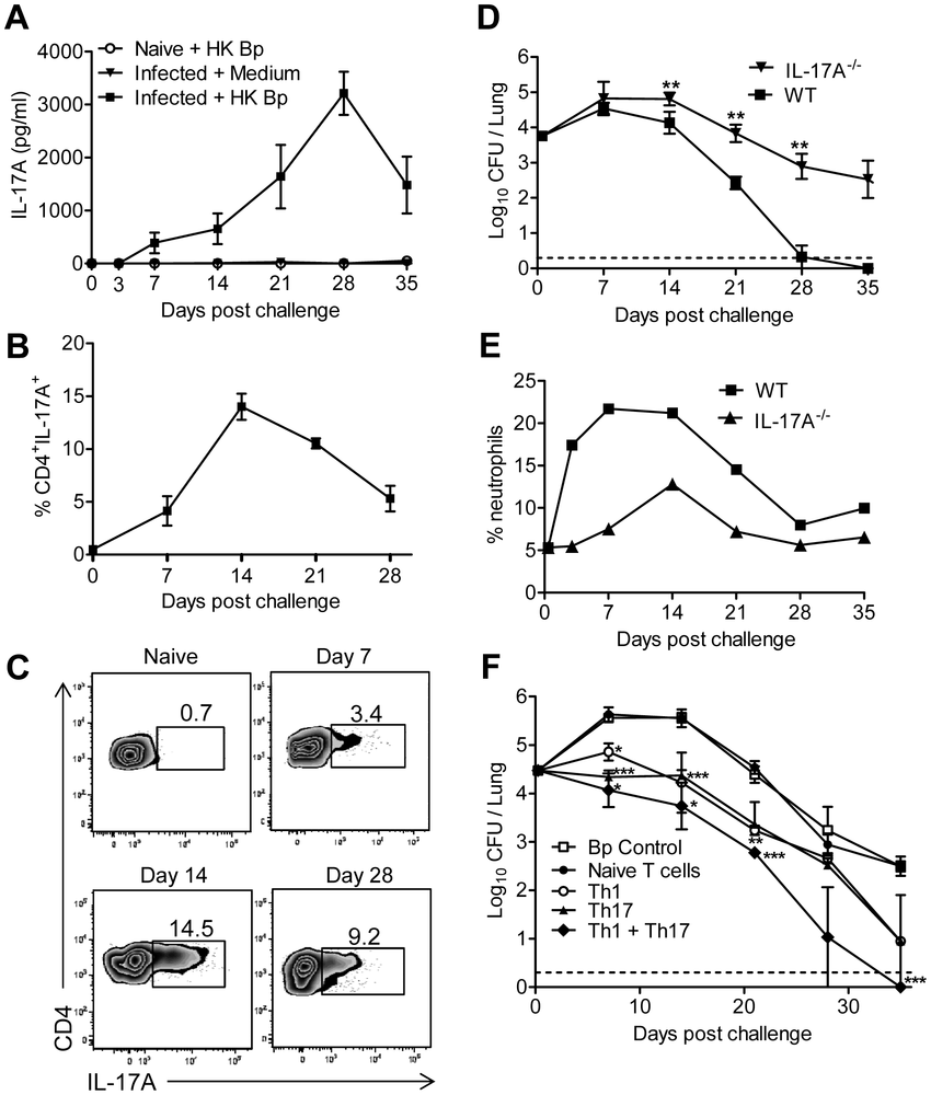 medium resolution of th17 and th1 cells mediate host immunity to b pertussis in the download scientific diagram