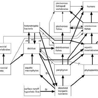 Generalized food web for floodplain-river ecosystems
