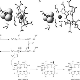 Midpoint redox potential of P. denitrificans CobG. The