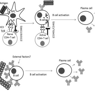 Schematic model of protein aggregation. Bioprocessing