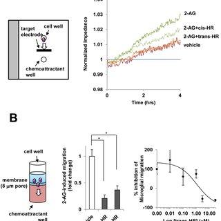 (PDF) Non-Selective Cannabinoid Receptor Antagonists