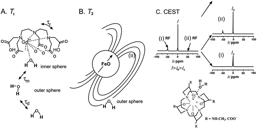Schematic of the physical principle of the working of MRI