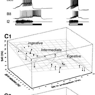 (PDF) Interneuronal basis of the generation of related but