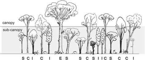 forest canopy diagram 0 a 10 schematic showing typical layers in the afrotemperate of diepwalle observational study emergent e and species c dominate