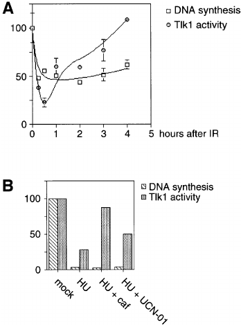 Tlk1 activity is not directly dependent on ongoing DNA