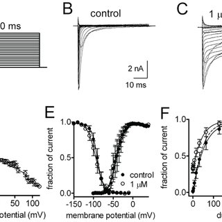 Effects of toxin CvIV4 on voltage-gated sodium channel