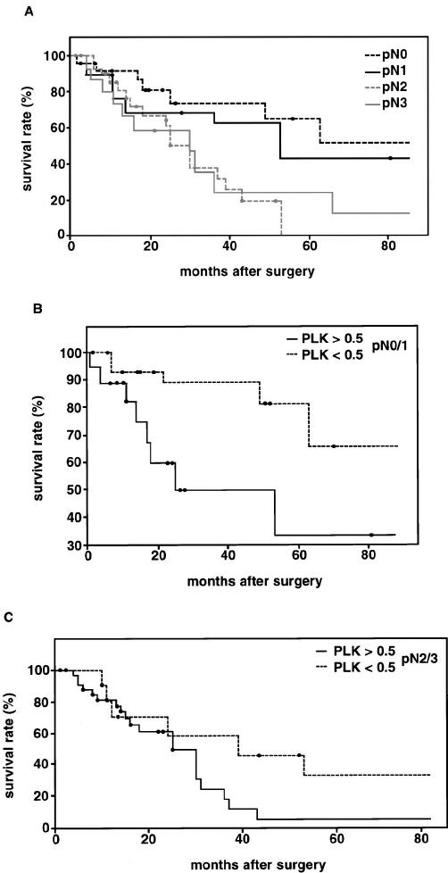 Kaplan-Meier curve of survival ( n ϭ 89) in relation to pN