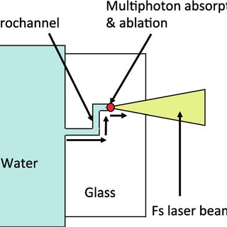 euglena diagram blank star bus network topology electro orientation of cells in a microfluidic channel schematic water assisted femtosecond laser drilling for the fabrication 3d microchannels
