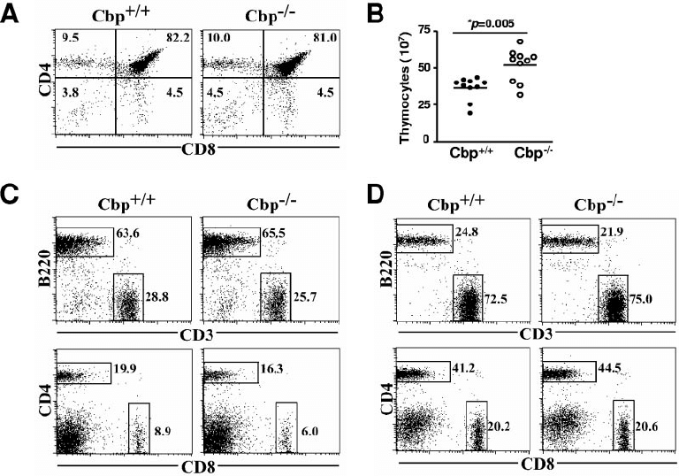 Normal T-cell development in Cbp Ϫ / Ϫ mice. Flow