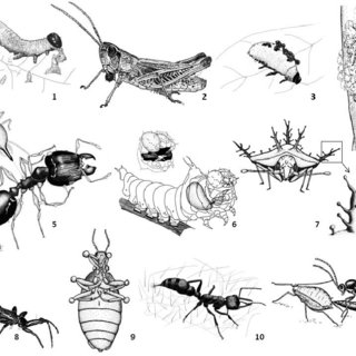 (PDF) Toxins, Defensive Compounds and Drugs from Insects