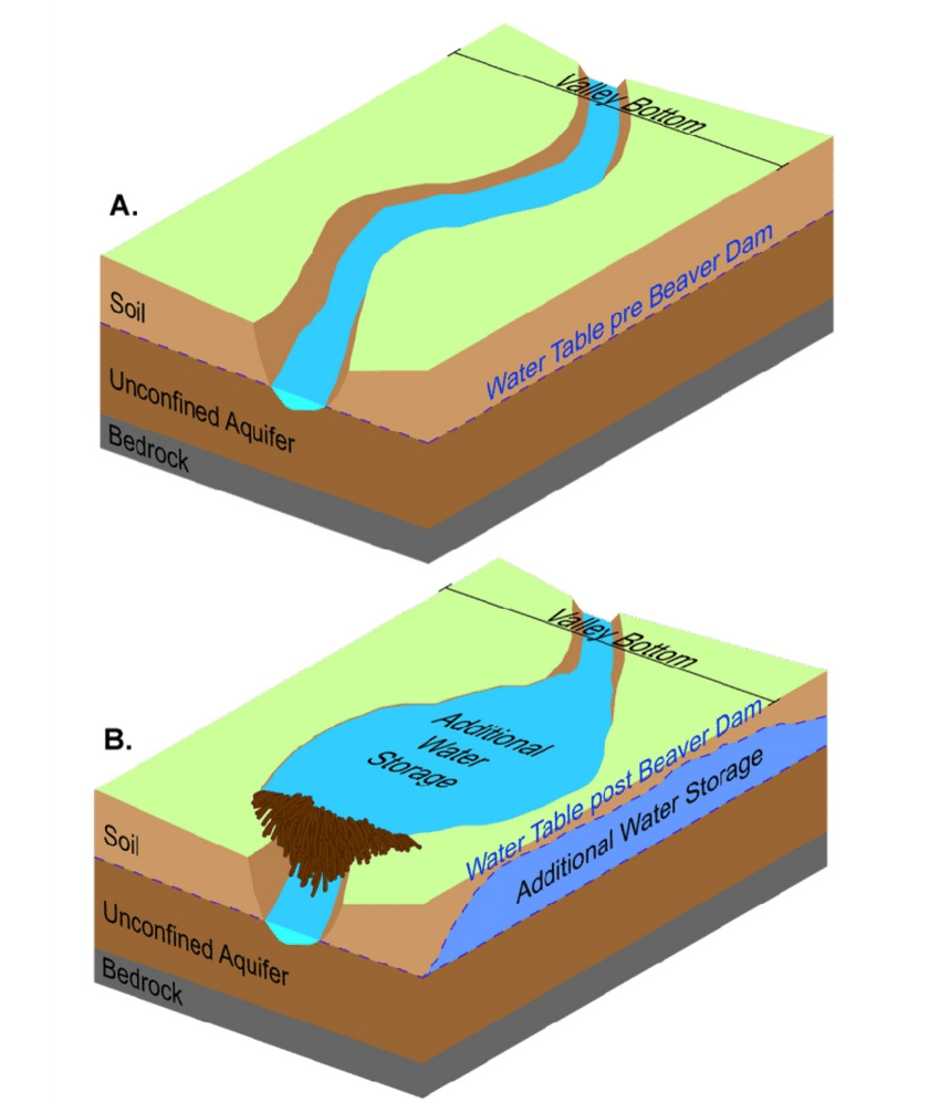 medium resolution of conceptual illustration of water storage additions pre beaver dam a underground water well diagram beaver dam diagram