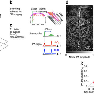 (PDF) High-speed Label-free Functional Photoacoustic