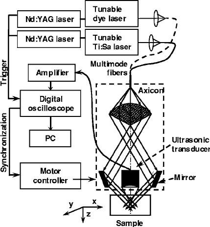 Schematic of the dual-wavelength photoacoustic microscope