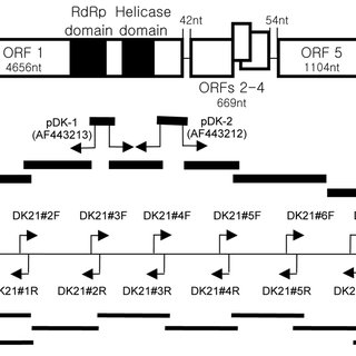 (PDF) Molecular characterization of a dsRNA mycovirus