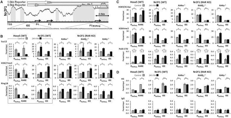 Polycomb recruitment attenuates retinoic acid–induced