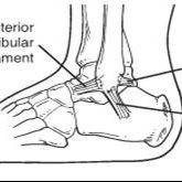 Anatomy of the lateral ankle ligament complex.(Picture