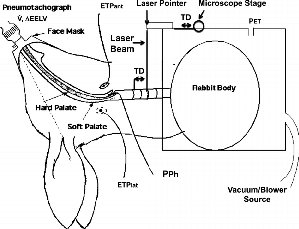 Schematic diagram of the experimental set-up. The rabbit