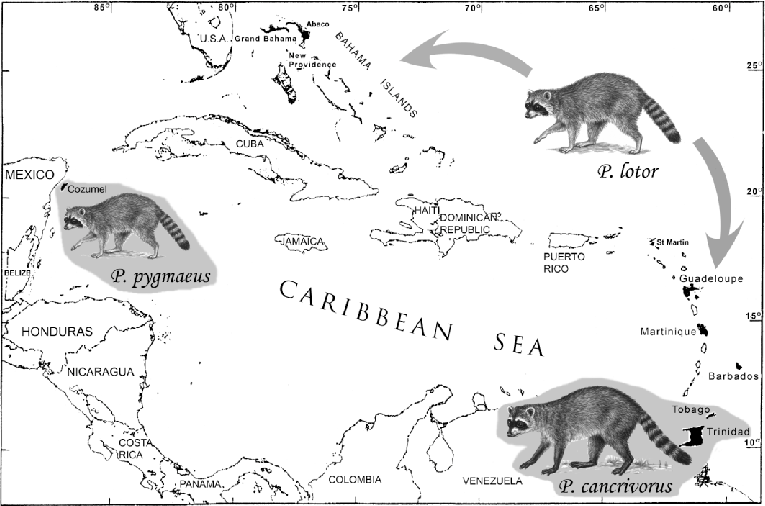 —Map of the West Indies, showing the distribution of