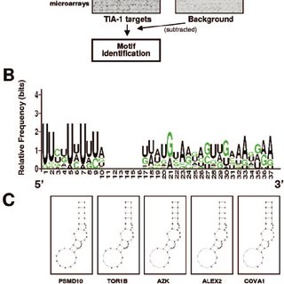 (PDF) Identification and Functional Outcome of mRNAs