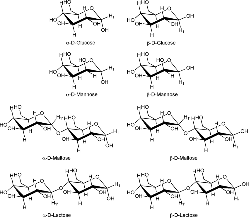 Schematic structural diagrams of the anomers of D-glucose