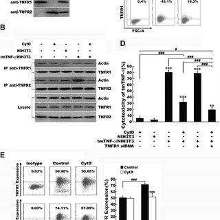 Prevention of tmTNF--induced uncoupling of TRAF2 from